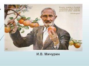 И.В. Мичурин