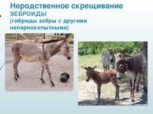Неродственное скрещивание ЗЕБРОИДЫ (гибриды зебры с другими непарнокопытными)