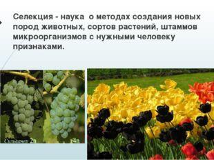 Селекция - наука о методах создания новых пород животных, сортов растений, шт