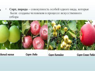 Сорт, порода – совокупность особей одного вида, которые были созданы человеко