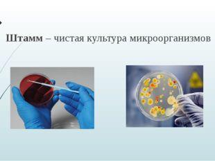 Штамм – чистая культура микроорганизмов