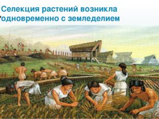 Селекция растений возникла одновременно с земледелием