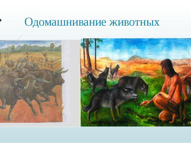 Одомашнивание животных