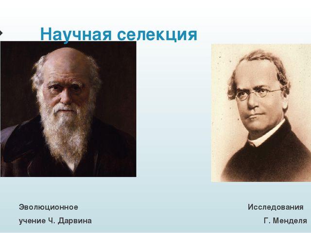 Эволюционное Исследования учение Ч. Дарвина Г. Менделя Научная селекция