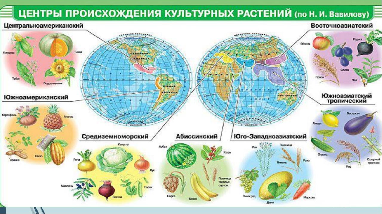 Центры происхождения