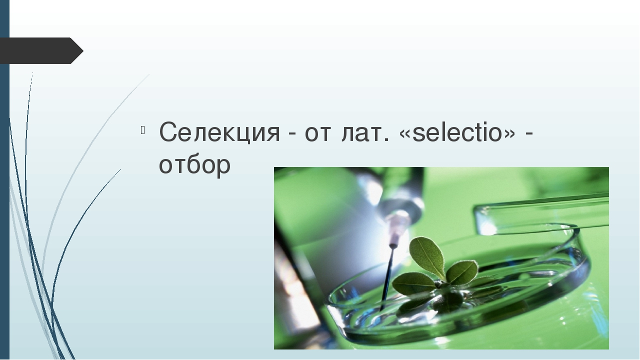 Селекция - от лат. «selectio» - отбор