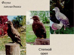 Фауна заповедника Степной орел