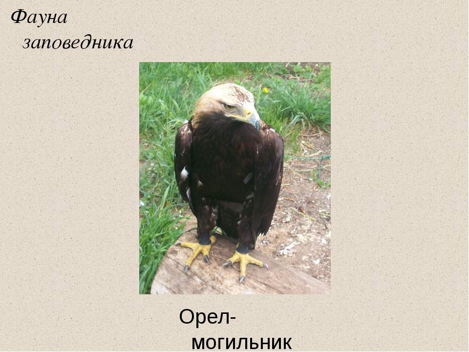 Фауна заповедника Орел-могильник