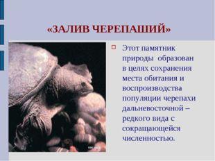 «ЗАЛИВ ЧЕРЕПАШИЙ» Этот памятник природы образован в целях сохранения места о