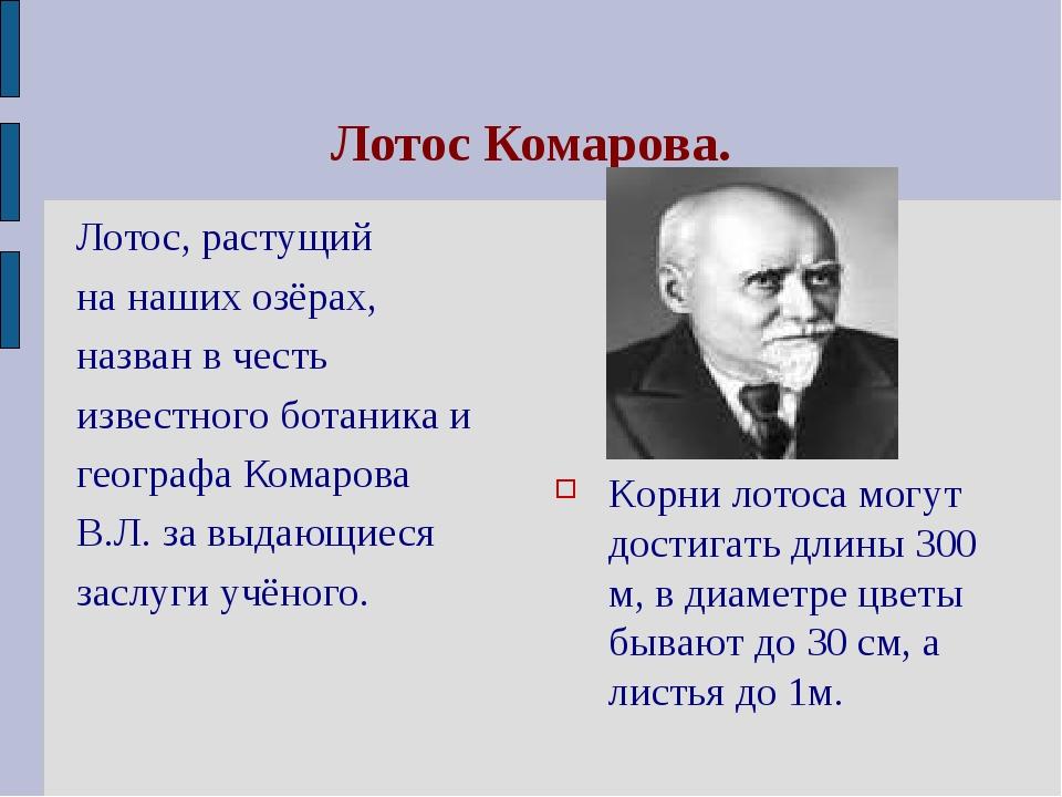 Лотос Комарова. Лотос, растущий на наших озёрах, назван в честь известного бо...