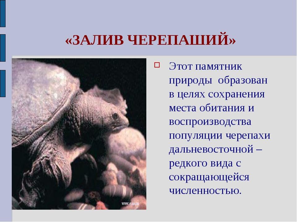 «ЗАЛИВ ЧЕРЕПАШИЙ» Этот памятник природы образован в целях сохранения места о...