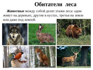 Животные между собой делят этажи леса: одни живут на деревьях, другие в куст
