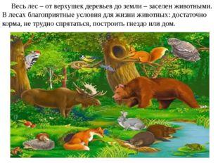 Весь лес – от верхушек деревьев до земли – заселен животными. В лесах благоп