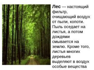 Лес — настоящий фильтр, очищающий воздух от пыли, копоти. Пыль оседает на лис