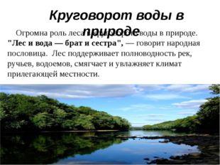 """Огромна роль леса в круговороте воды в природе. """"Лес и вода — брат и сестра"""""""