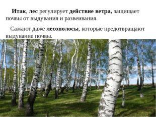 Итак, лес регулирует действие ветра, защищает почвы от выдувания и развеиван