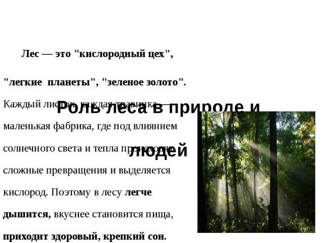 """Роль леса в природе и жизни людей Лес — это """"кислородный цех"""", """"легкие плане..."""