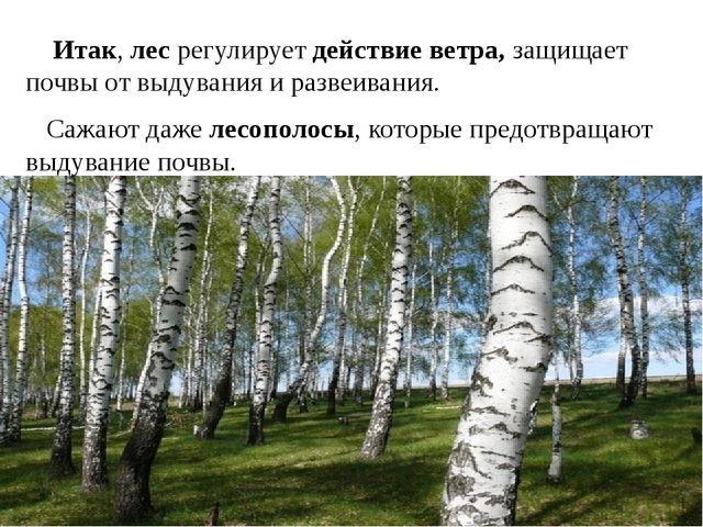 Итак, лес регулирует действие ветра, защищает почвы от выдувания и развеиван...