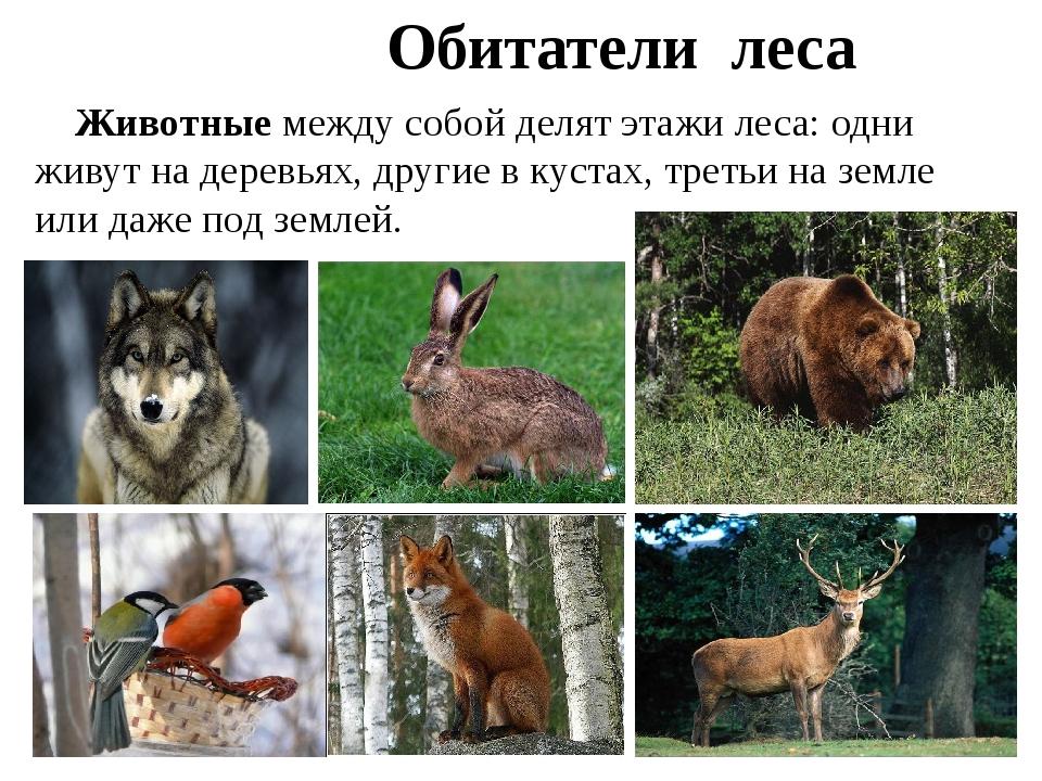 Животные между собой делят этажи леса: одни живут на деревьях, другие в куст...