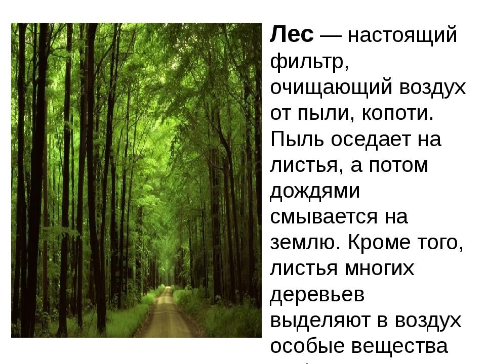 Лес — настоящий фильтр, очищающий воздух от пыли, копоти. Пыль оседает на лис...