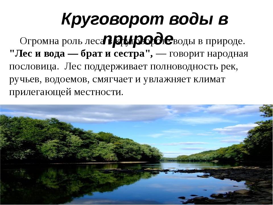 """Огромна роль леса в круговороте воды в природе. """"Лес и вода — брат и сестра""""..."""
