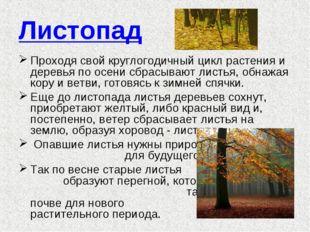 Листопад Проходя свой круглогодичный цикл растения и деревья по осени сбрасыв