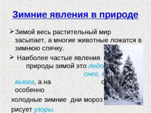 Зимние явления в природе Зимой весь растительный мир засыпает, а многие живот