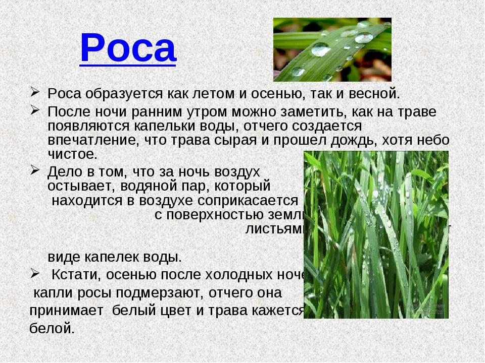 Роса Роса образуется как летом и осенью, так и весной. После ночи ранним утро...