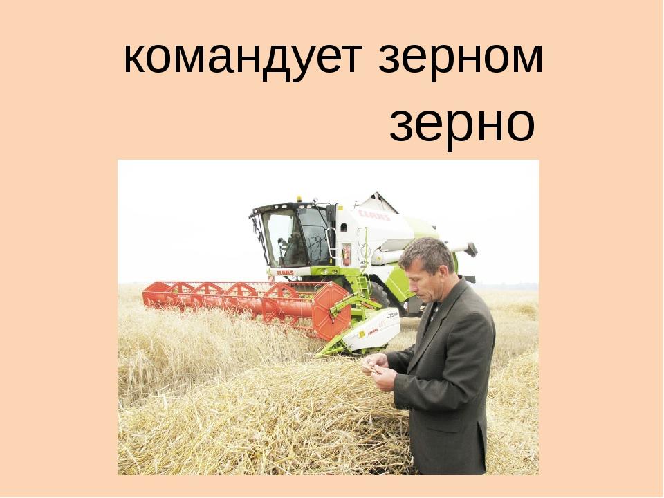 командует зерном зерно