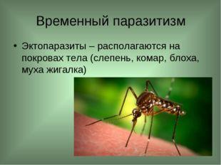 Временный паразитизм Эктопаразиты – располагаются на покровах тела (слепень,
