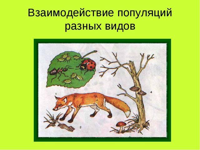 Взаимодействие популяций разных видов