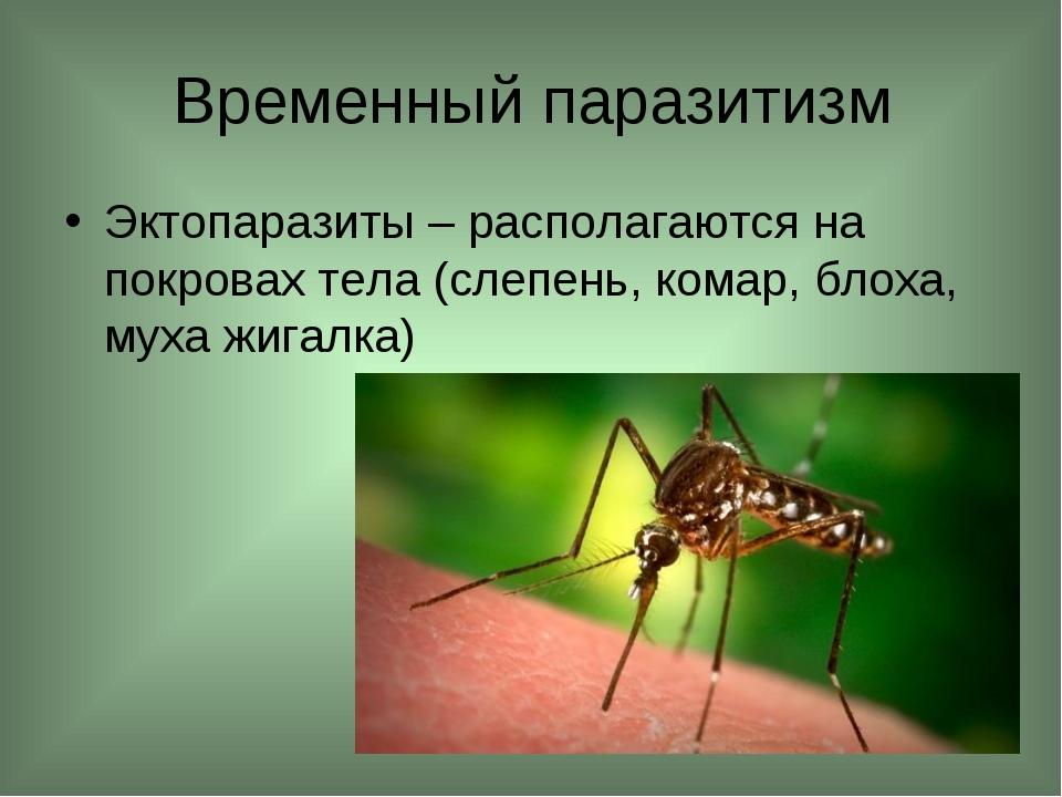 Временный паразитизм Эктопаразиты – располагаются на покровах тела (слепень,...