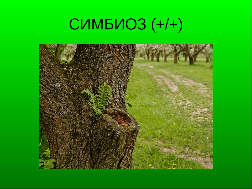 СИМБИОЗ (+/+)