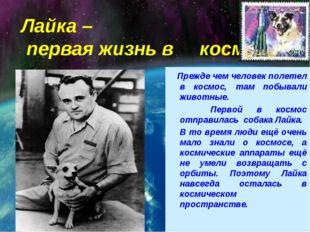 Лайка – первая жизнь в космосе Прежде чем человек полетел в космос, там побыв