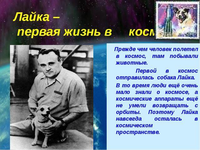 Лайка – первая жизнь в космосе Прежде чем человек полетел в космос, там побыв...