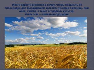 Много извести вносится в почву, чтобы повысить её плодородие для выращивания