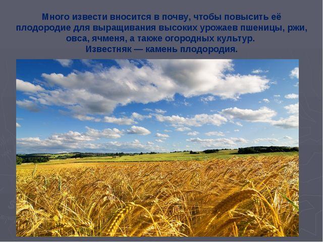 Много извести вносится в почву, чтобы повысить её плодородие для выращивания...