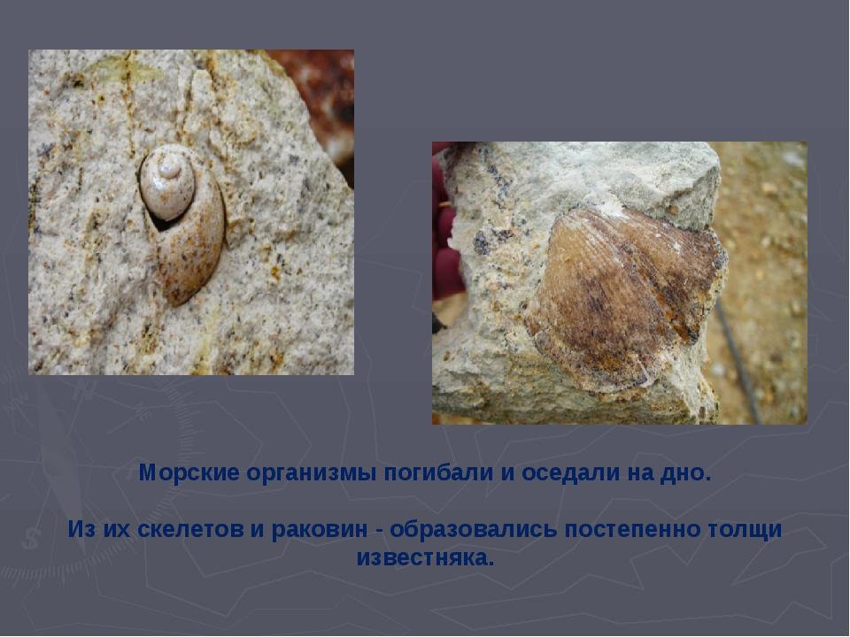 Морские организмы погибали и оседали на дно. Из их скелетов и раковин - обра...