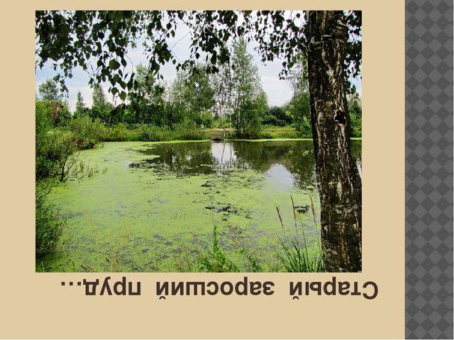 Старый заросший пруд…