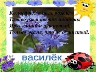 Колосится в поле рожь, Там во ржи цветок найдёшь. Ярко-синий и пушистый, Толь