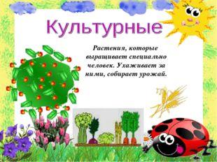 Растения, которые выращивает специально человек. Ухаживает за ними, собирает