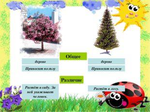 Общее Различие Растёт в лесу. Растёт в саду. За ней ухаживает человек. дерево