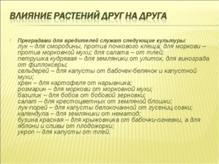 Преградами для вредителей служат следующие культуры: лук – для смородины, про