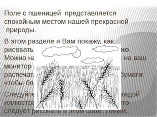 Поле с пшеницей представляется спокойным местом нашей прекрасной природы.
