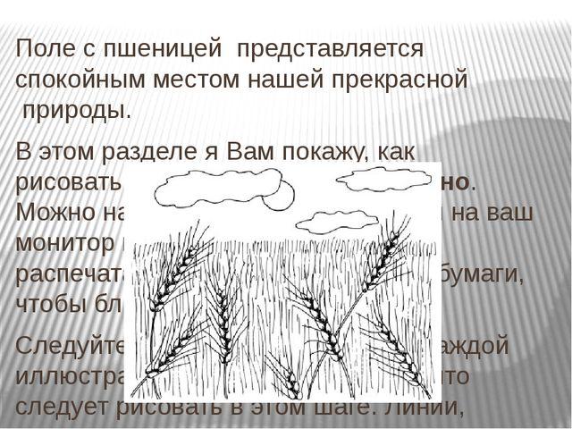 Поле с пшеницей представляется спокойным местом нашей прекрасной природы....