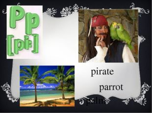 pirate parrot palm