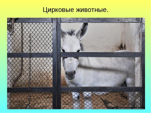 Цирковые животные.