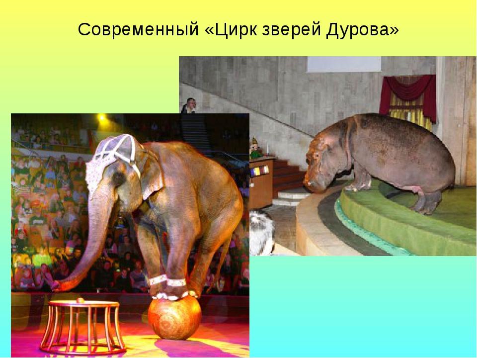Современный «Цирк зверей Дурова»