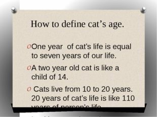 How to define cat's age. One year of cat's life is equal to seven years of o
