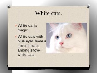 White cats. White cat is magic. White cats with blue eyes have a special plac